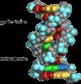 Zink ( Zn) stabiliserar strukturen hos protein, DNA och hormonreceptorer