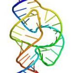 Nukleotider, Nukleinsyra, RNA