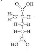 L-glutamin, L-glutaminsyra