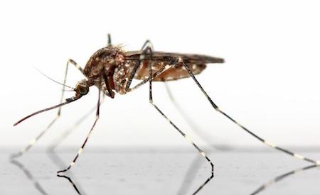 Göra eget myggmedel - naturligt myggmedel